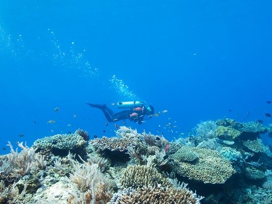 宁格鲁潜水