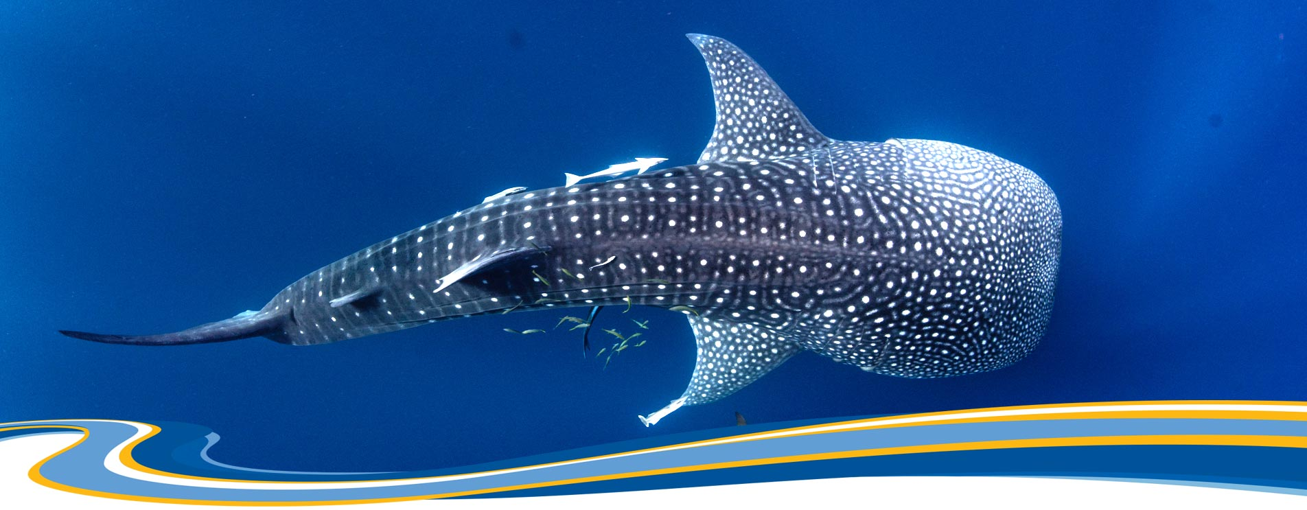 Terms and Conditions Kings Ningaloo Reef Tours